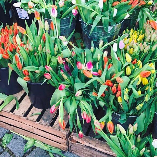 Jaro tak kde jsi??  spring tulips tulipany flowers beautifulhellip